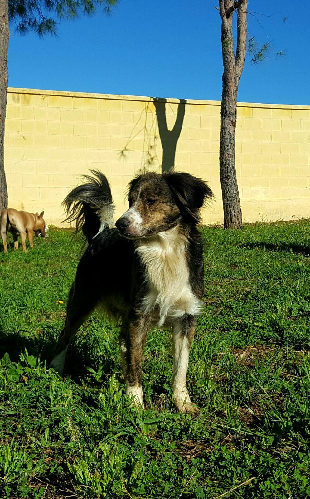 <b>Adoptado!!</b> Berto en adopción, super cariñoso y delicado.