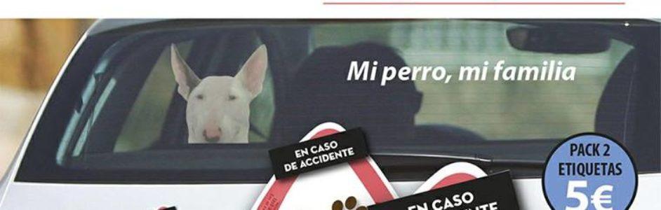 Pegatinas chulas Bull Terrier para tu coche – Donación