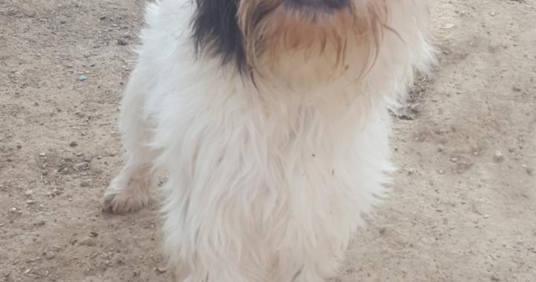 <b>Adoptado</b> Bombón
