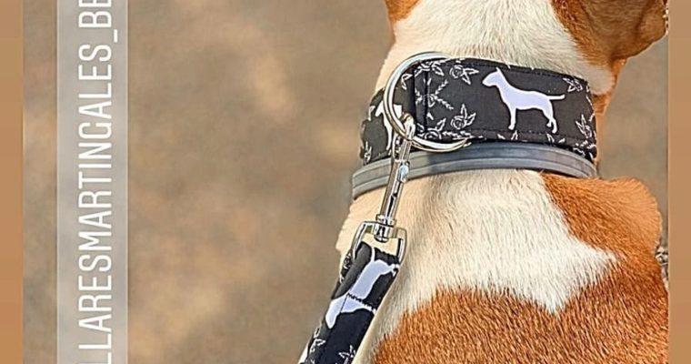 Ayuda comprando un collar para tu bull terrier